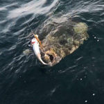 ОСНАСТКА ДЛЯ ЛОВЛИ ПАЛТУСА на мертвую рыбку