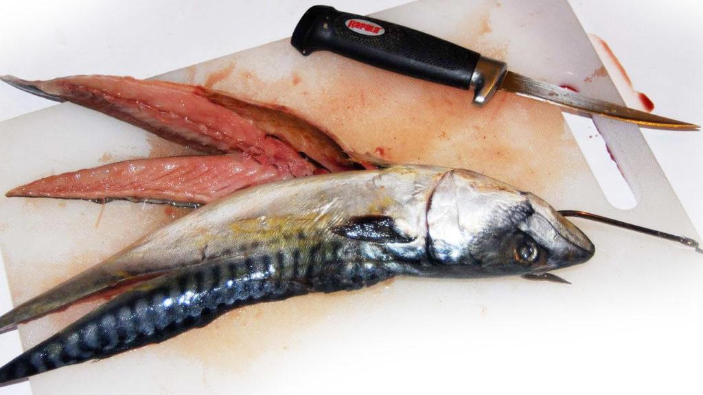 Наживка для ловли крупной рыбы