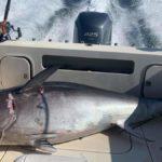 Спортивная ловля тунца в Норвегии